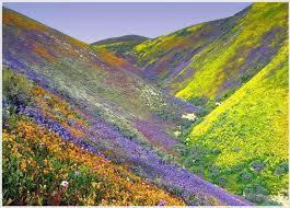 Valley of Flowers Tour Packages
