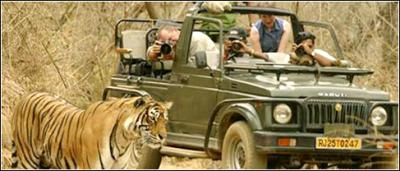 Jim Corbett Elephant Safari Packages