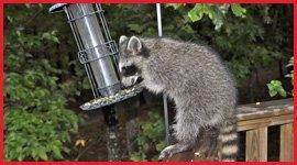 Professional and Reliable Wildlife Removal and Control Services