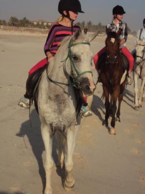 Horseback Riding and Rescue in Salalah, Oman
