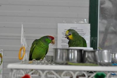 Kimbi Parrots Game Reserve Resort