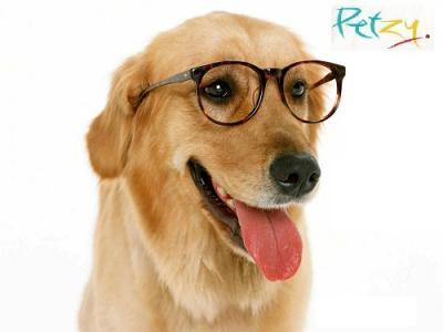 Dog Food Online at Petzy