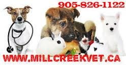 High Quality Veterinary Hospital in Mississauga