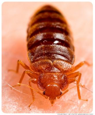 Cockroaches ,Bed Bugs, Termites, Fleas , Roaches Extermination services Mombasa