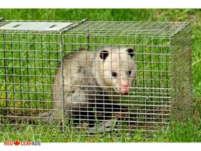 Affordable  Animal & Wildlife Removal Services in Hamilton