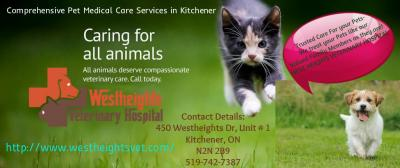 Pet Health Care Services – Local Veterinary Services Kitchener