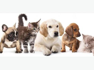 Wellness And Vaccination For Pets In Toronto And GTA