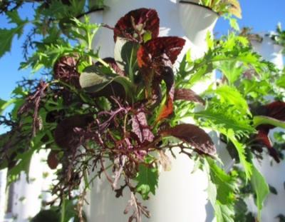 Get the best gardening services at true garden