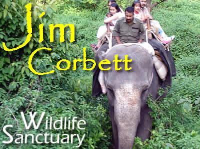 Jim Corbett Elephant Safari Packages