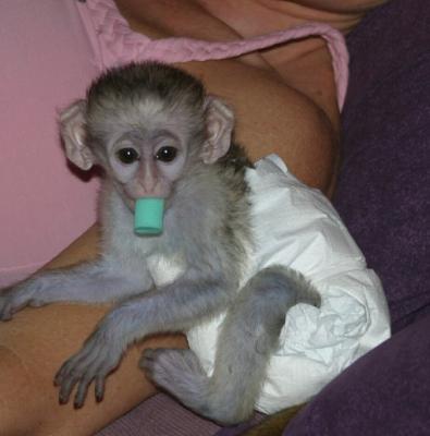 lovely baby monkeys