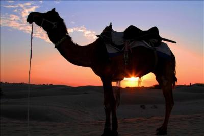 Rajasthan Holiday deals