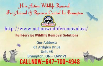 Hire Action Wildlife Removal For Animal  Control