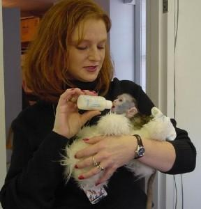 Adorable and Healthy Male and Female Capuchin Monkeys For Adoption