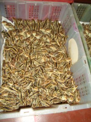 PROTEIN - RICH QUAIL MEAT FOR SALE FOR PET FEEDERS OR FOOD: BETTER THAN CHICKEN