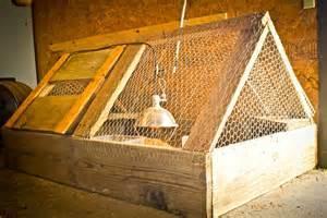 Chicken incubator sale