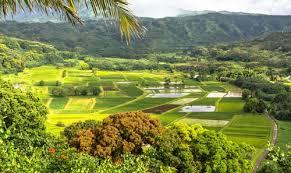Insurance Services in Hawaii
