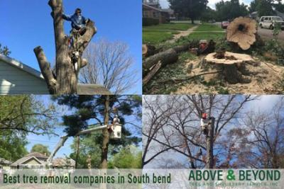 Best Tree Removal Services in South Bend, Indiana