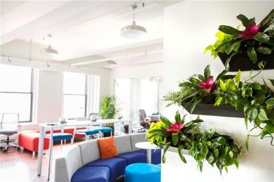 Living Green Wall – Stay Connected With Nature
