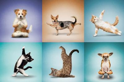 Holistic Dewormer for Pets like Dogs and Cats